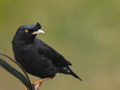 各种观赏鸟